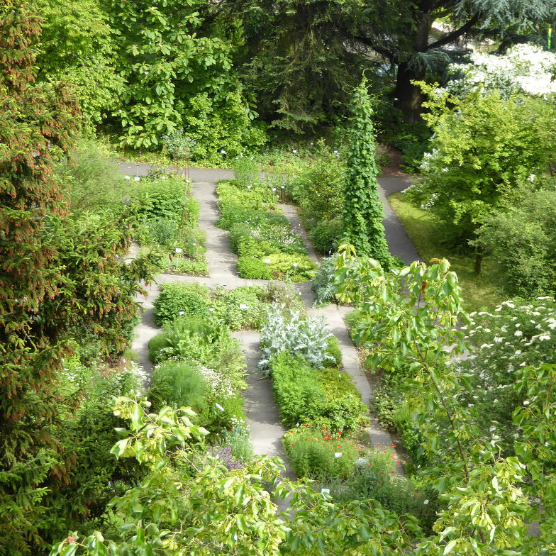 Medicinal plant garden in the botanical garden Bern
