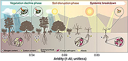 Sequence of abrupt responses in global drylands as aridity increases.